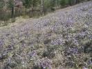 Склон горы Улан-Бас весной 2013 г.