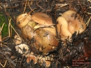 Дары природы - популярные грибы